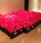 200 Bags, oh my!
